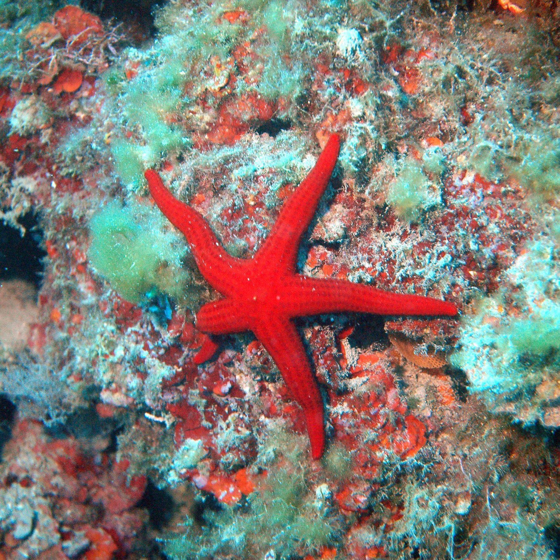 Corsi di subacquea in Calabria