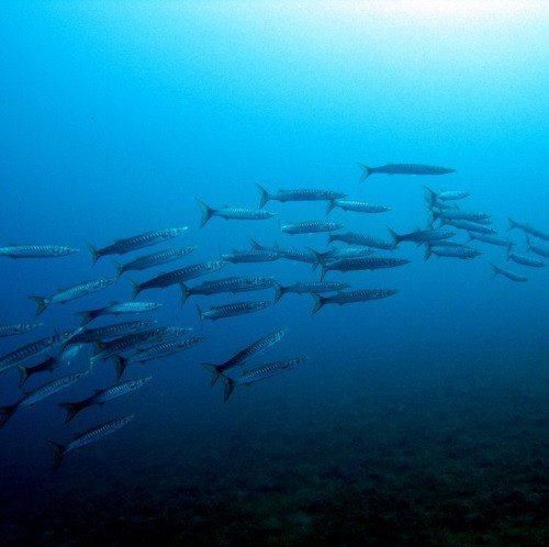 Corso Open Water Diver PADI - Isola d'Elba