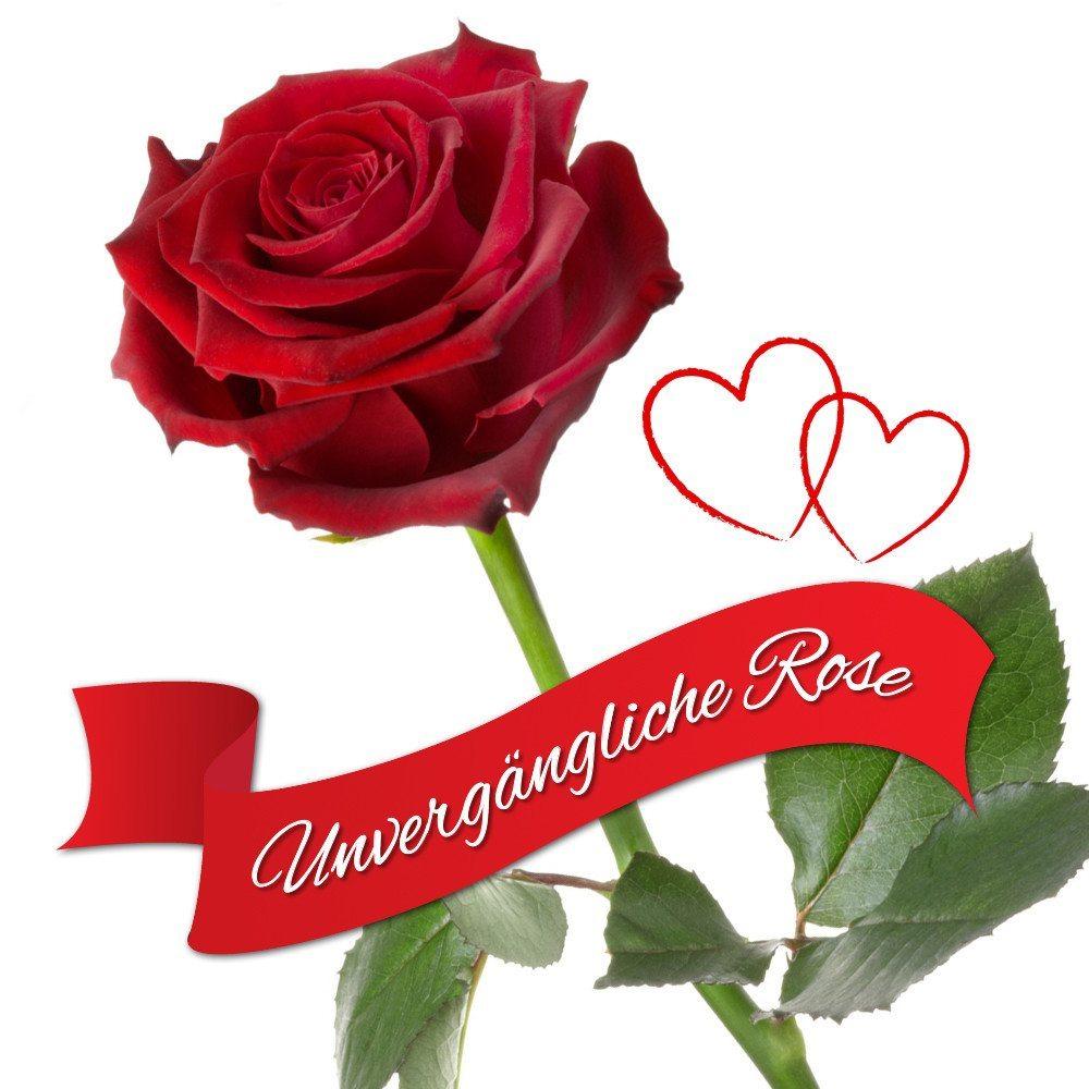 Die ewig blühende Rose