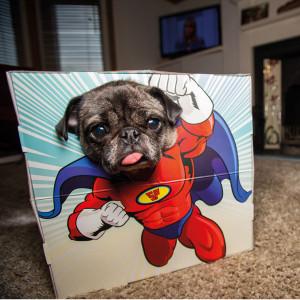 """""""Abenteuerbox"""" für Haustiere"""
