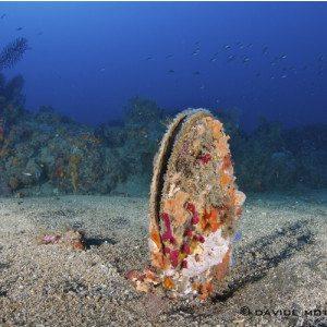 Battesimo subacqueo - Santo Stefano al Mare