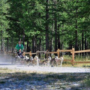 Dog Kart: fatti trainare da fantastici cani Husky - Sestriere