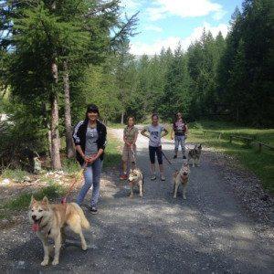 Dog trekking: escursione con cani Husky - Sestriere