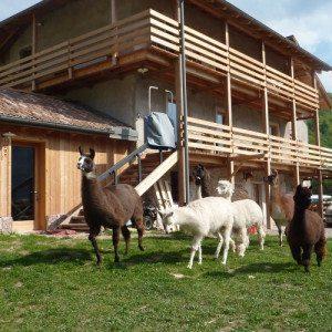 Due notti in agriturismo con lama e alpaca - Trentino