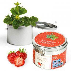 Erdbeere in Geschenkdose