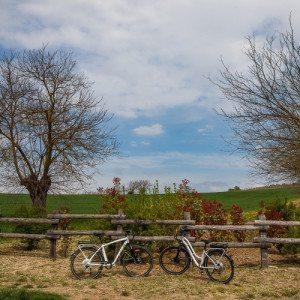 Escursione enogastronomica in bici - Monferrato