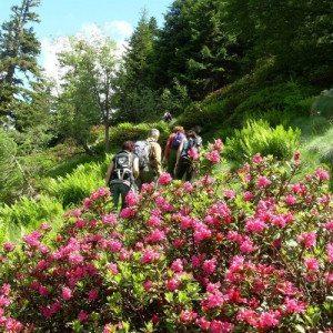 Giornata di trekking sulle Alpi