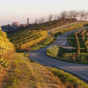 In bici tra i vigneti e degustazione per due - Castagnole Monferrato