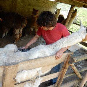 La giornata del piccolo contadino - Trentino