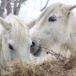 Passeggiate o escursioni a cavallo - Macugnaga