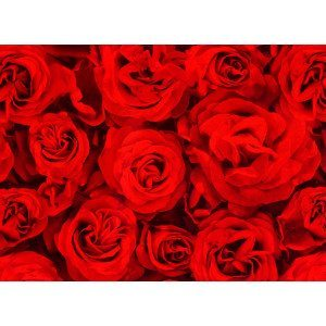 "Carta da regalo ""Rose rosse"""