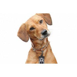 Roll Dog - Dispenser sacchetti per cani