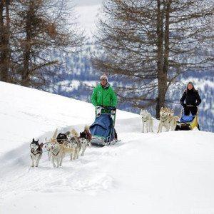 Sleddog: guida una slitta trainata da Husky - Sestriere, Torino