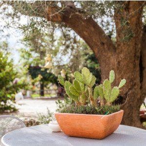 Soggiorno 1 notte con degustazione - Ostuni, Puglia
