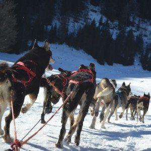 Soggiorno e sleddog a Madonna di Campiglio - Trentino