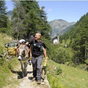 Trekking con gli asini