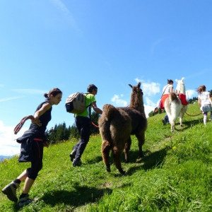 Trekking con i lama - Monguelfo-Tesido, Alto Adige
