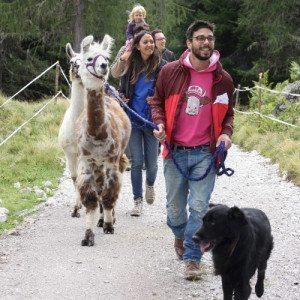 Trekking in compagnia di lama, alpaca e asini - Trentino